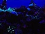 Dark Blue Coral