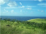 Maui Meadow with Trees