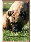Bullmastiff lovers
