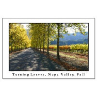 <b>napa valley wine country posters + framed print