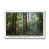 sf travel gifts - trees magnets