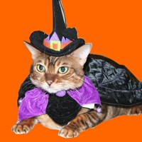 Halloween Witch Bengal Cat