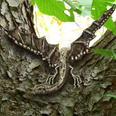 Brown Wood Dragon