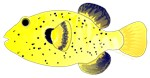 Guineafowl Puffer Yellow