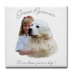Great Pyrenees, more than just a dog !