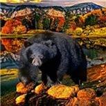 Bear Lookout