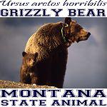Montana State Animal