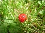Sweet Berry