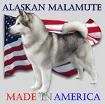 Alaskan Malamute: Made in America