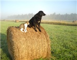 Cat and Dog on Hay Bale