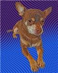 Comical Chihuahua
