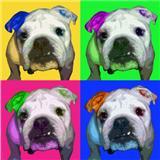 Pop Bulldog