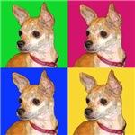Pop Chihuahua
