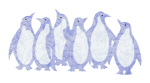 Blue Penguins