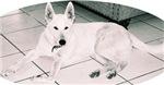 White German Shepherd Dog, Too!