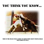 """You think you know..."" - Pitbull Bite Statistics"