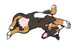 Sleeping Bernese Mountain Dog Puppy (no-logo)01
