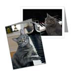 CARDS - NORA THE PIANO CAT™