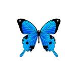 Blue Butterly