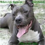 Smile With American Pit Bull Terrier Style