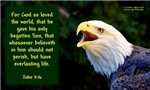 Talking Eagle - John 3:16 (Eagle faces left)