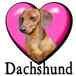 Valentine's Day Dachshund