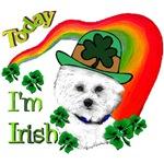 St Patrick's Day Bichon Frise