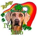 Today I'm Irish Weimaraner