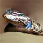 Lizard Life