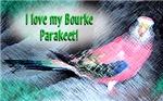 Bourke Parakeets