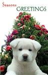 White Puppy Holiday