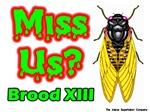 Cicadas Miss Us?