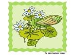Dainty Cicada