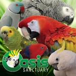 Flock of The Oasis Collection