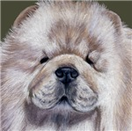 DOGS - 'CREAM CHOW CHOW'