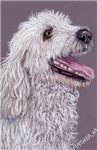 DOGS - LABRADOODLE