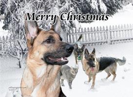 Christmas Shepherd Family Fun