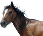 Horse Design ver2