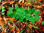 Drops on Leaves II