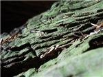 Mossy Redwood Bark