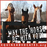 May the Horse Be With You II
