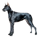 Black Great Dane Products
