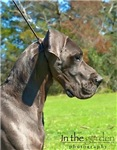 Blue Great Dane Skins ans Cases Natural and Croppe