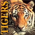 Colorful Cats, Tigers, Lions & Felions