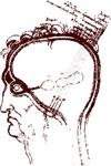 brain/eye study