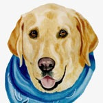 Blue Bandana Yellow Lab