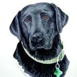 Bart Black Labrador