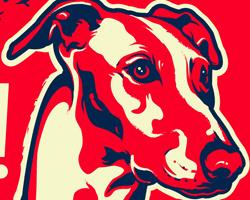 Greyhound Dictator