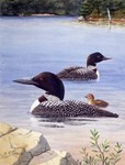 Loon Pair with Chick