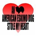 An American Eskimo Dog Stole My Heart